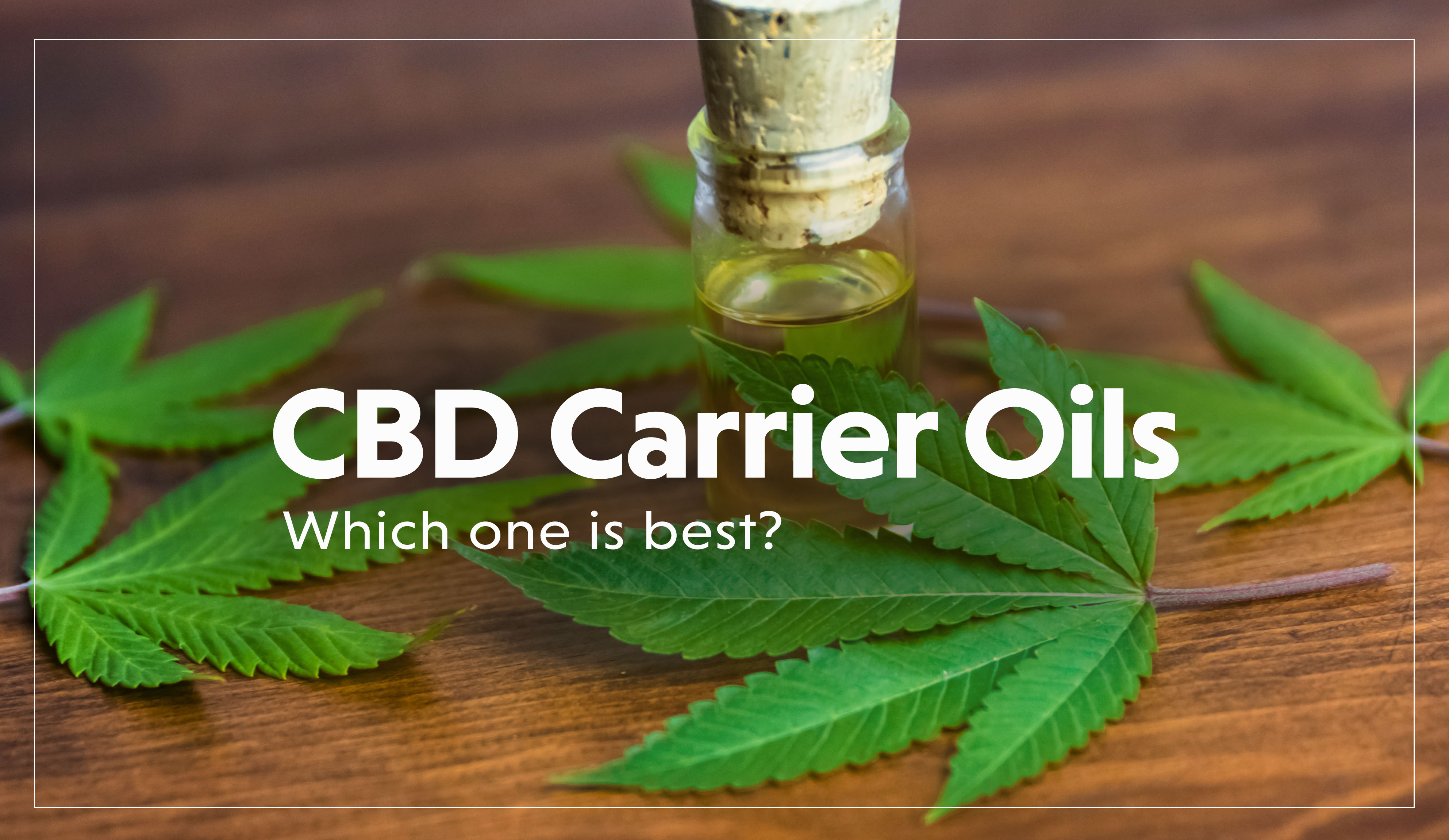 CBD Carrier Oils