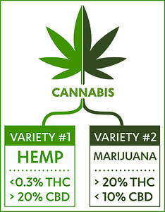 Cannabis Species Graphic Boxed-1