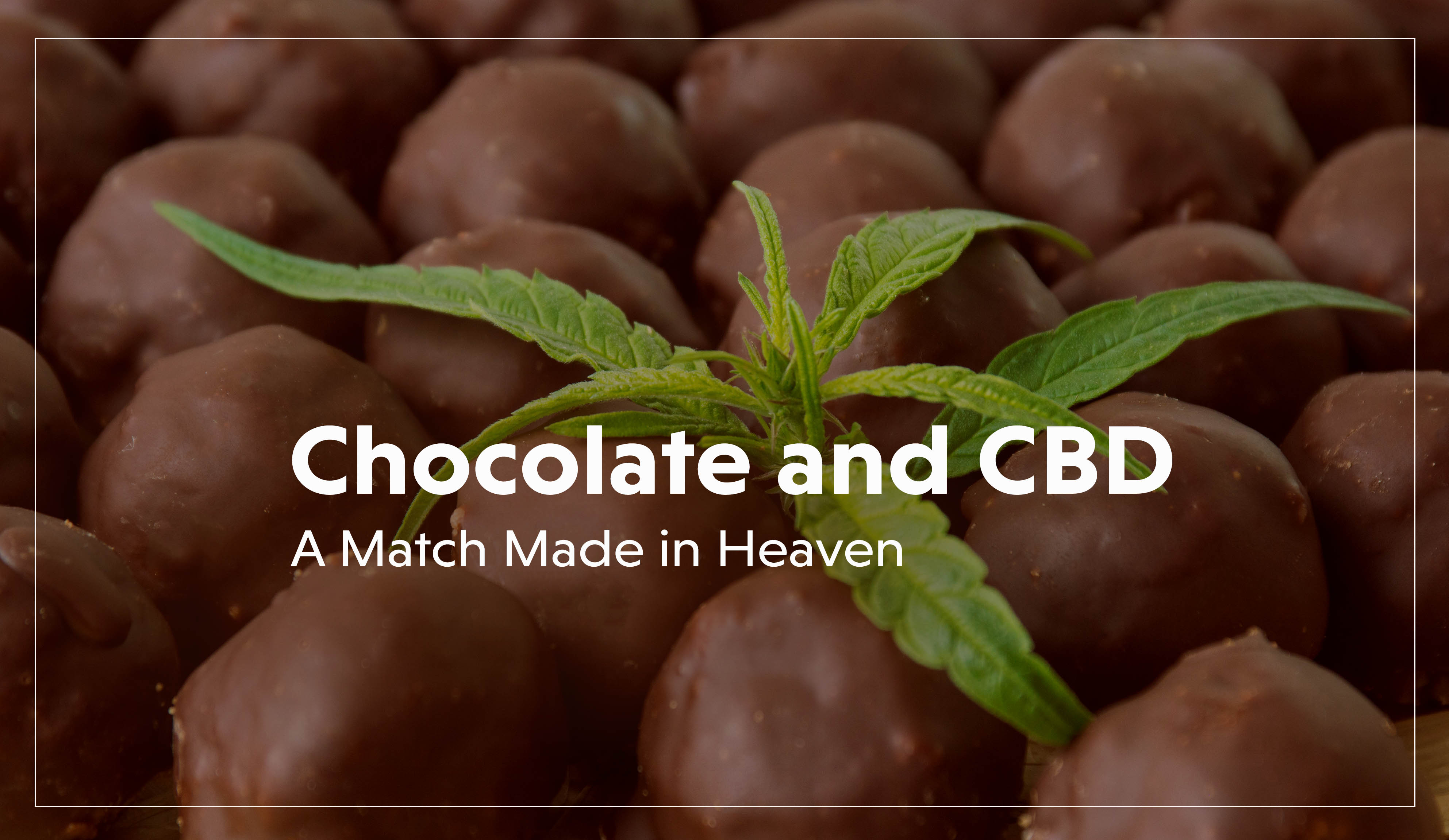 Chocolate and CBD