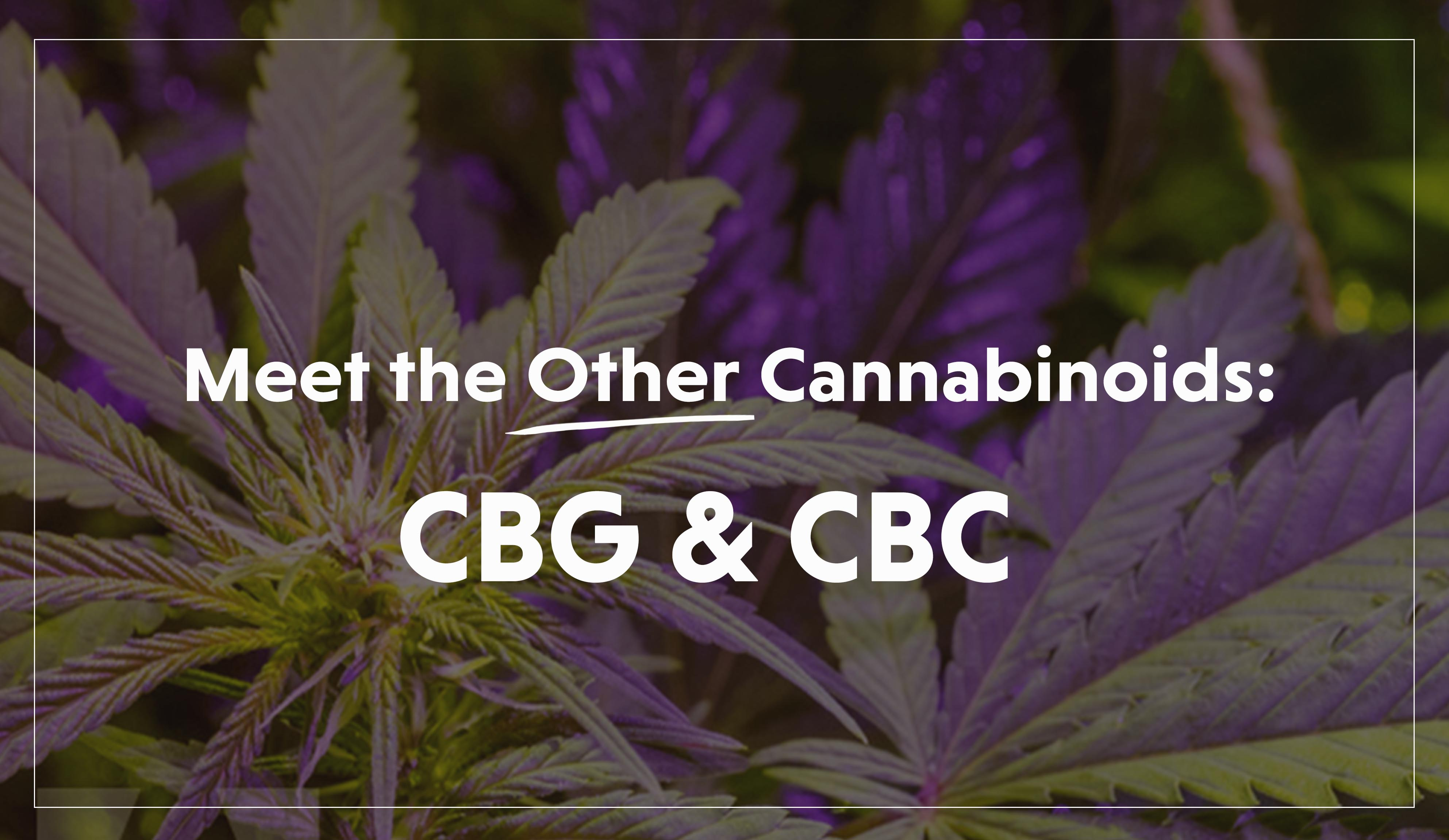 Meet the Other Cannabinoids