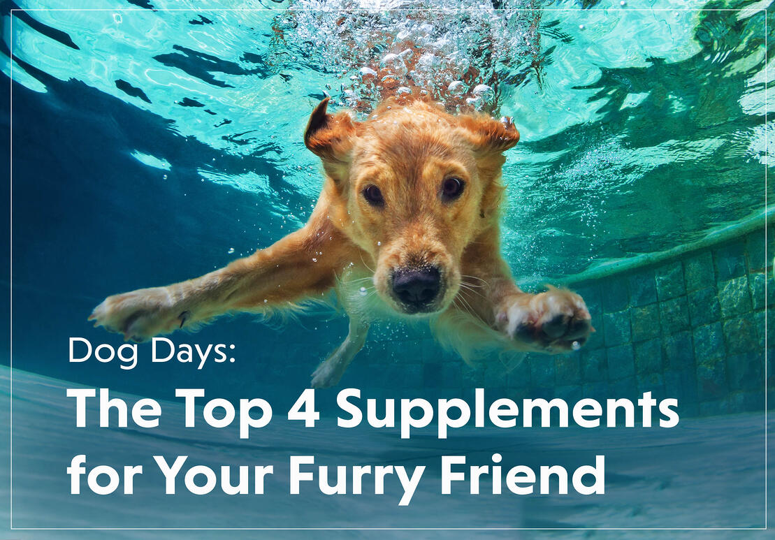 Top 4 Supplements for Your Dog
