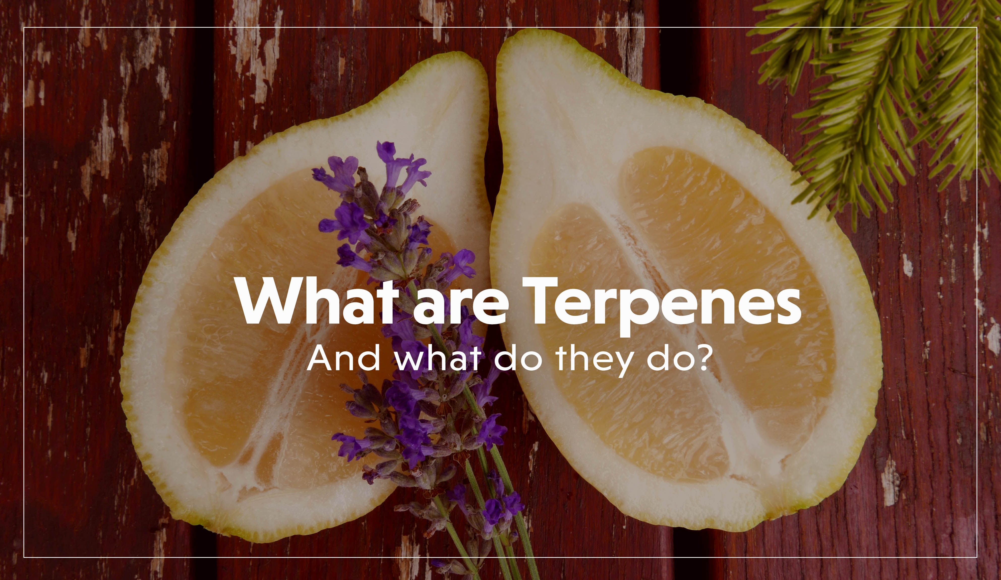 What are Terpenes?-2